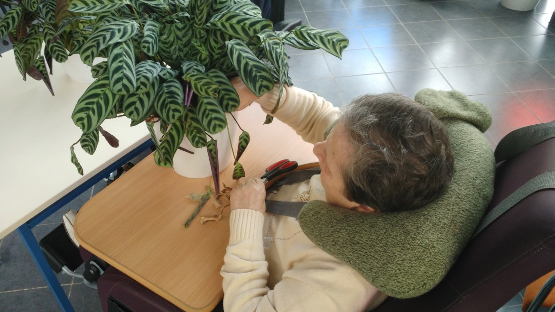 praca na zajęciach hortiterapii