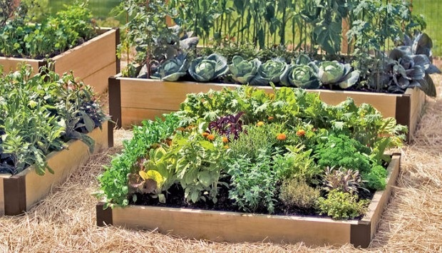 8565-raised-beds-hortiterapia